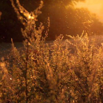 alergia, nietolerancje pokarmowe